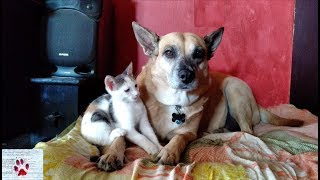 Cats and Dogs Friends Forever  ❤ compilation by The Orphan Pet