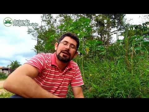 Autor da Própria Saúde - Dica de Planta Medicinal # Paracari