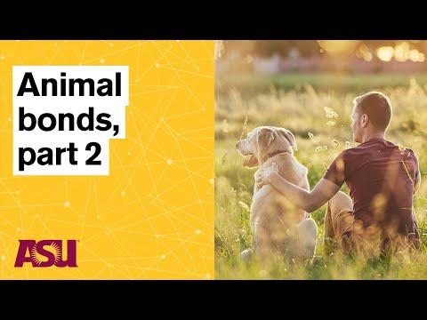 The Human-Animal Connection, Part 2: Arizona State University (ASU)