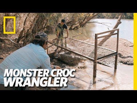 Croc In The Mud | Monster Croc Wrangler