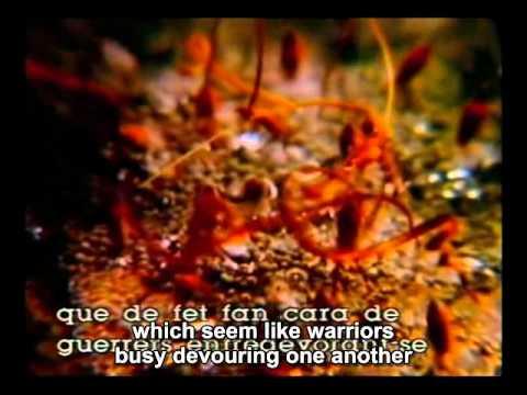 Dali - Impressions de la Haute Mongolie part 2 English subtitles