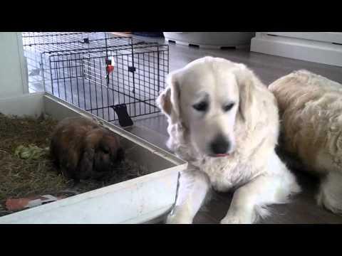 Hond met konijn