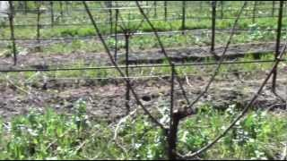 Winemaker Joe Hurliman on the Warnecke Ranch and Vineyards