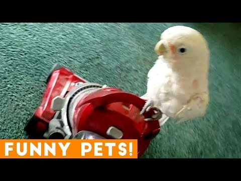 Funny clips - Funniest Pets of the Week Compilation February 2018  Funny Pet Videos