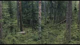 Природа и животный мир/Russia Nature and wildlife