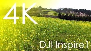 4K空撮 / 菜の花 里山
