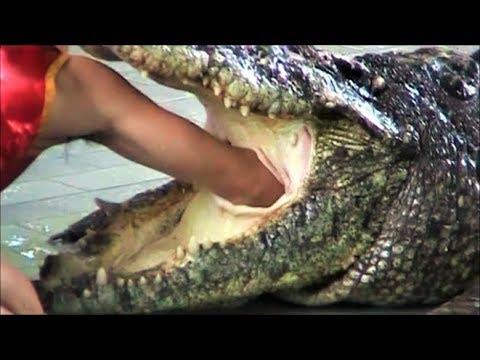 以為把手放進鱷魚嘴而已,沒想到他竟然會亡命使出這一招
