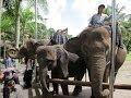 バリ島エレファントライド Elephant ride in Bari.