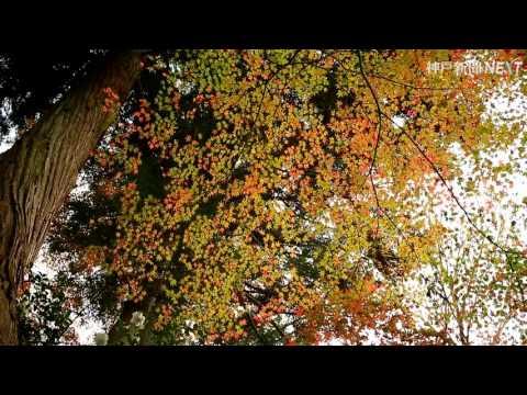 錦秋鮮やかに 神戸・瑞宝寺公園