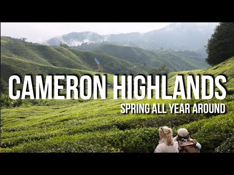 Cameron Highlands - Spring All Year Around