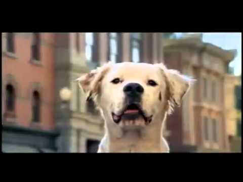 Budweiser Commercial – lucky dog