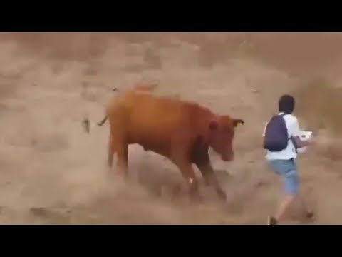 News : Salute Brave Animal rights activists || Bull released to stop them || Viral Video 2015
