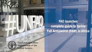 FAO launches complete guide to tackle Fall Armyworm (FAW) in Africa