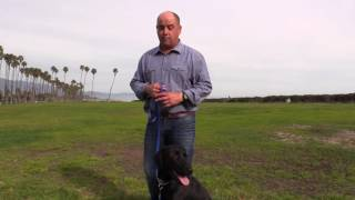 My 8 week training program - Nathan Woods, Dog Trainer