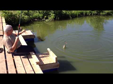хорошая рыбалка в липецкой области