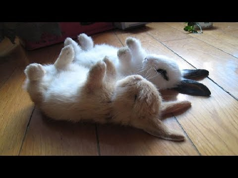Funny Baby Bunny Rabbit Videos #2 - Cute Rabbits Compilation 2018