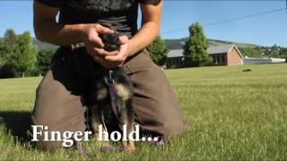 Liesel Weapon : Working dog in training WEEK 2
