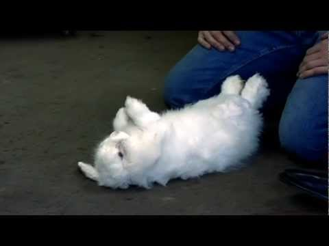 How to hypnotise a rabbit