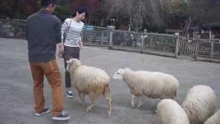 羊さんみんなで突撃!
