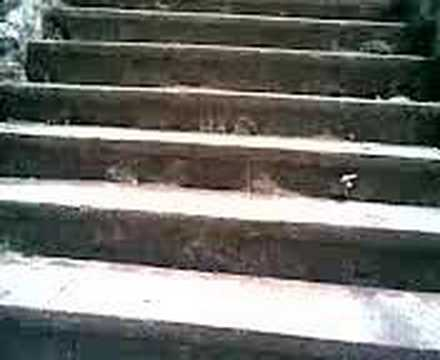 Steps of SCIS Mannanam