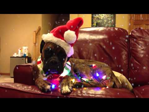 Merry Puppy Christmas :: A Brock the Boxer Christmas