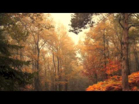 Three Words - Stephen Fox