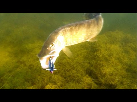 Best on youtube pike attack underwater Fishing lures for muskie bass zander perch catfish Атака щуки