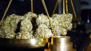 From Under The Seed Desk with Marijuana Man: An Ounce of Prevention, A Pound of Hypocrisy by Pot TV