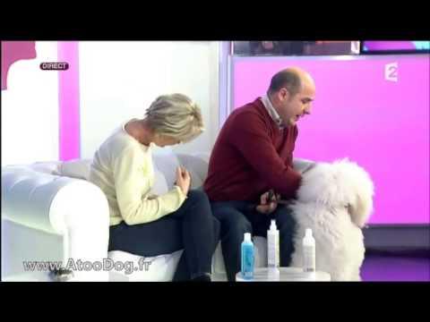 Comment laver votre chien à poils long - France 2 05-02-2014