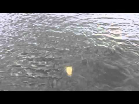 Pescaria mira Estrela