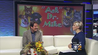 Ask Dr. Mike: Holiday Travel Safety Tips For Your Pets