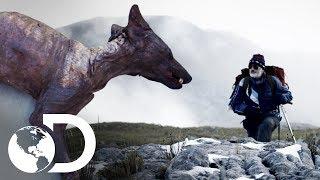 Misteriosos casos en el mundo   Archivo de lo inexplicable   Discovery Latinoamérica