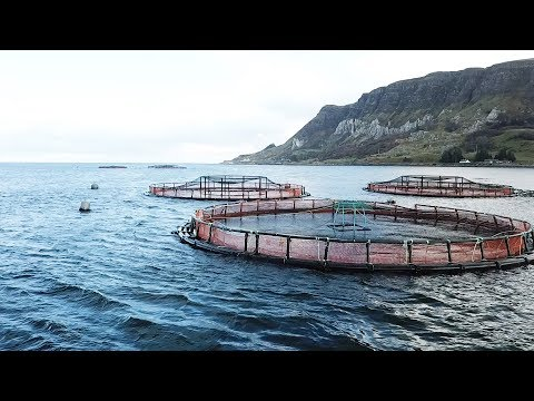 Smoked Salmon, Organic Farmed, Severn & Wye Smokery (100g)