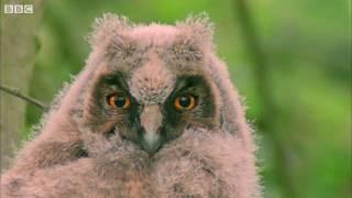 Video Funny Talking Animals (Walk on the Wild Side) HD - Children in Need Special 2009 - BBC MP3, 3GP, MP4, WEBM, AVI, FLV Juni 2018