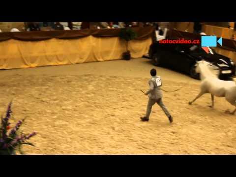 Přehlídka koní