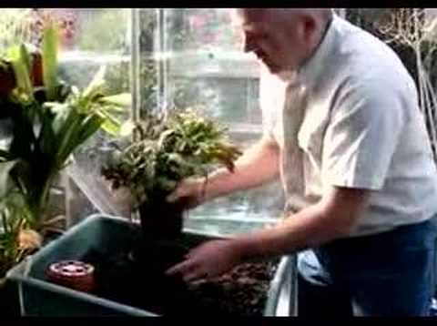 Hoggywart - Potted plants of all kinds, whether in the house, greenhouse or outside, need potting on eventually. There are several reasons, the most obvious being that t...