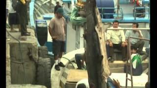 Vidéo de la Journée mondiale de l'alimentation 2005