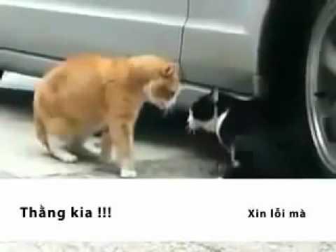 Hai em mèo tâm sự với nhau