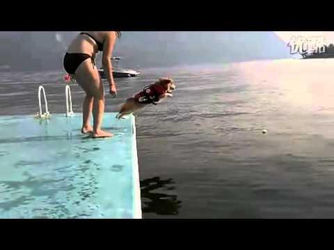 這隻狗竟然想不開跳水!難道是因為失戀了嗎?