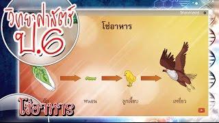 สื่อการเรียนการสอน โซ่อาหาร ป.6 วิทยาศาสตร์