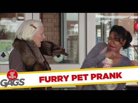 Fur pelt? No, furry pet! - Youtube