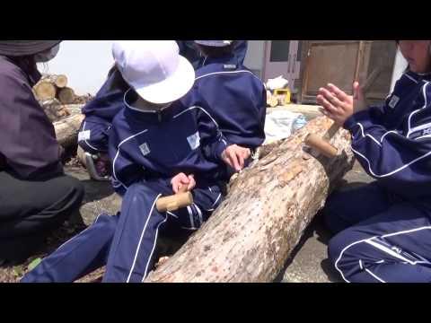 2014.4.24 真室川小学校原木なめこ菌植え体験