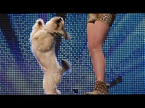 Pudsey, The Dancing Dog