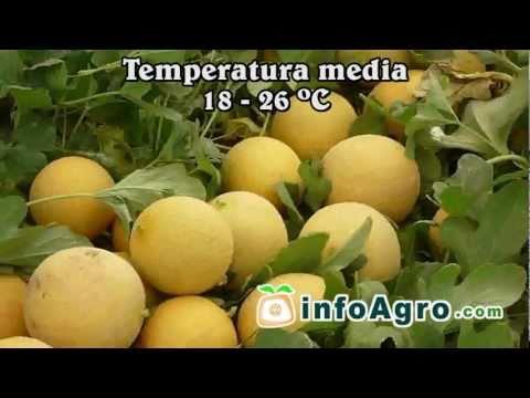 Melon Parte1