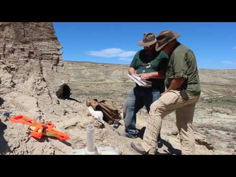 Episode 4: Ask Our Experts: How Do We Dig Up Fossils?