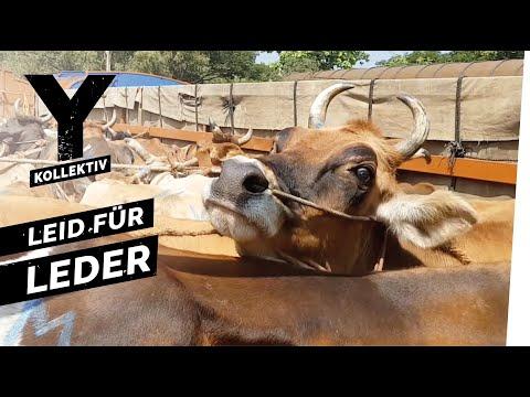 Tierquälerei und Umweltzerstörung - der teure Preis für Dein Leder I Y-Kollektiv Dokumentation