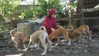 Video MENGEJUTKAN!! Hijaber Memeluk Anjing - Hal Tabu dalam ISLAM MP3, 3GP, MP4, WEBM, AVI, FLV Januari 2019