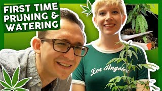 First Time Growing Weed at Home: Week 2 & 3 –Watering and Pruning! by That High Couple