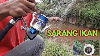 Video Sampe kuwalahan (mancing jaring/spring bom net) di sarang ikan mujair MP3, 3GP, MP4, WEBM, AVI, FLV September 2018