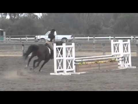 Horse competition-Ernie Howlett Park, Palos Verdes 2010